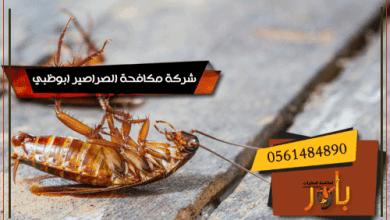 شركة مكافحة الصراصير ابوظبي