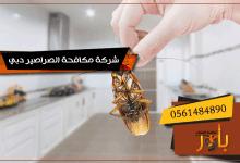 شركة مكافحة الصراصير دبي
