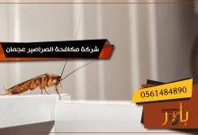 صورة شركة مكافحة الصراصير عجمان   مكافحة الصراصير بعجمان باقوي المبيدات