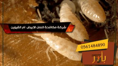 شركة مكافحة النمل الابيض ام القيوين