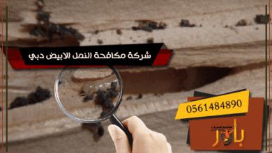 شركة مكافحة النمل الابيض دبي