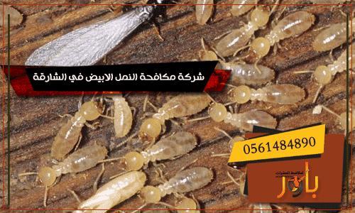 شركة مكافحة النمل الابيض في الشارقة