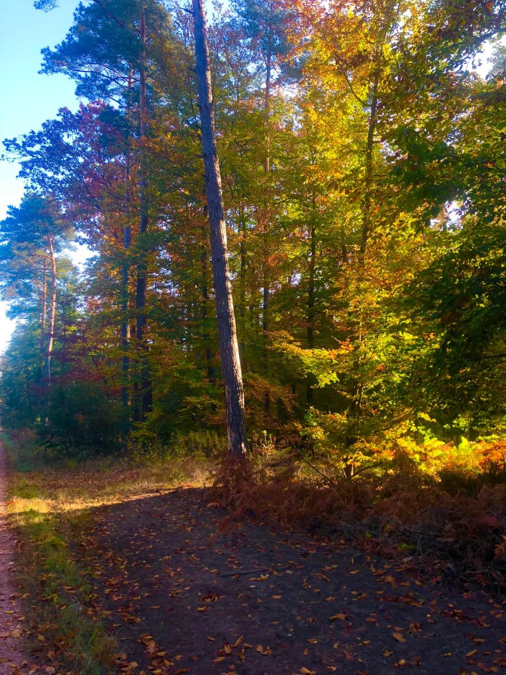 Weg am Waldrand vorbei  -> Spaziergang durch den Wald