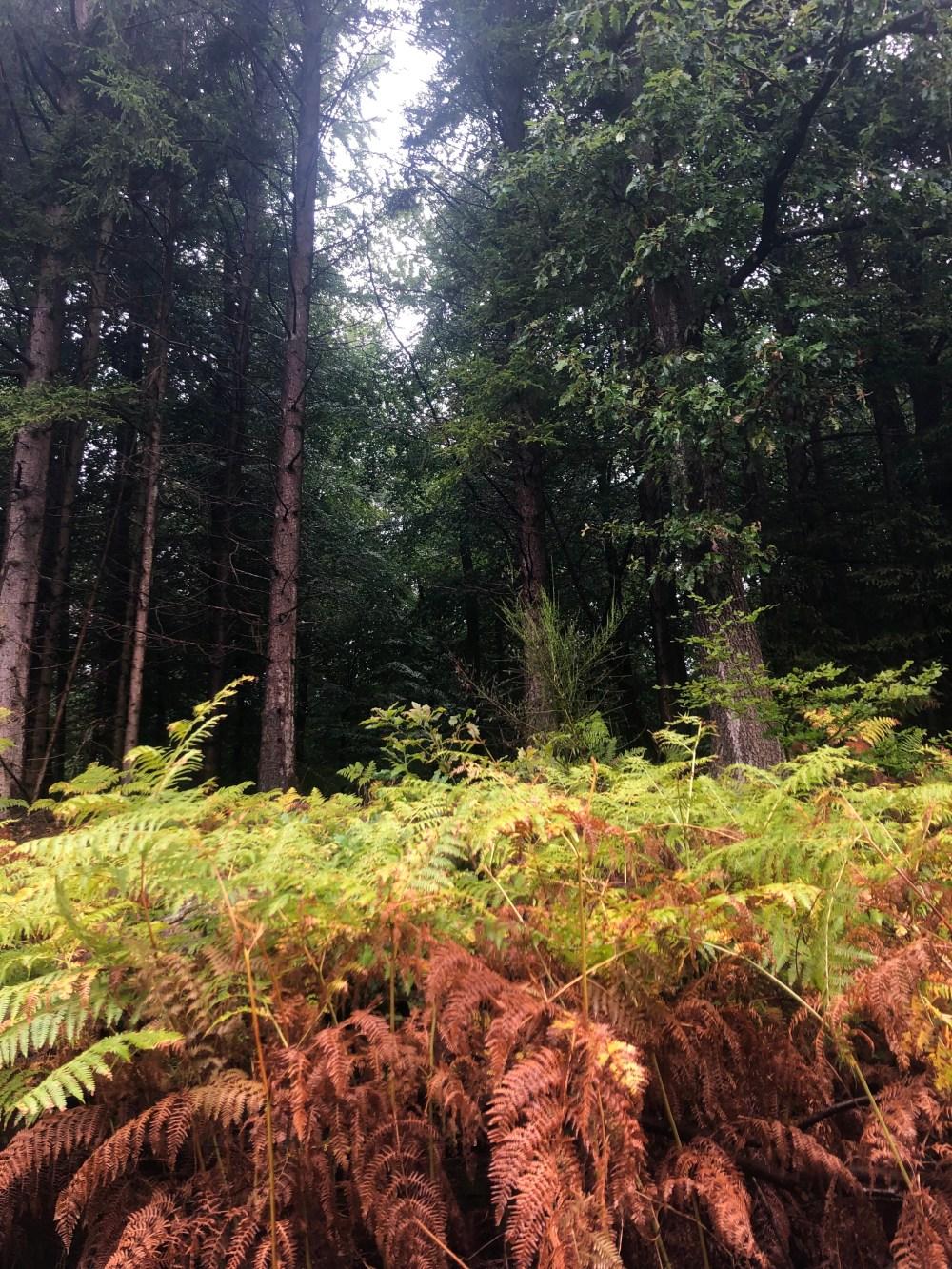 Fahn Pflanzen vor Bäumen
