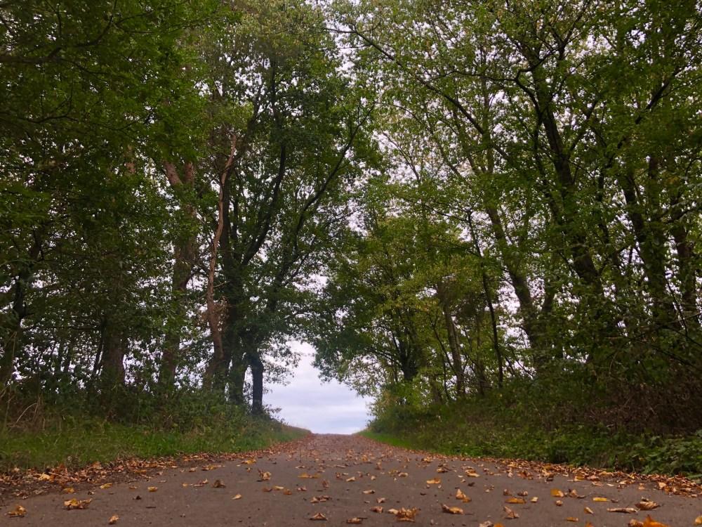 Weg zum Feld, durch ein Loch zwischen den Ästen, der Bäumen