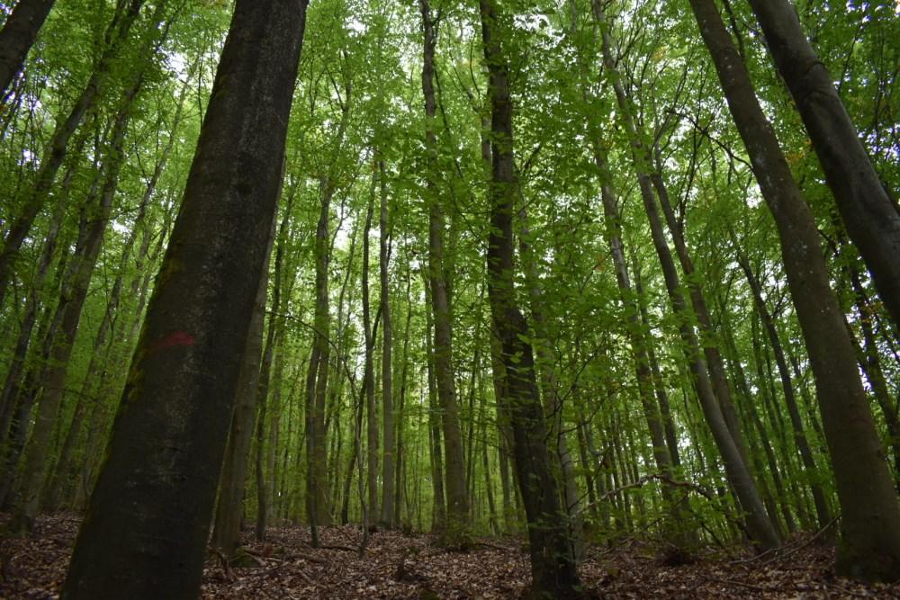 Viele lange Bäume in grünlichem Licht
