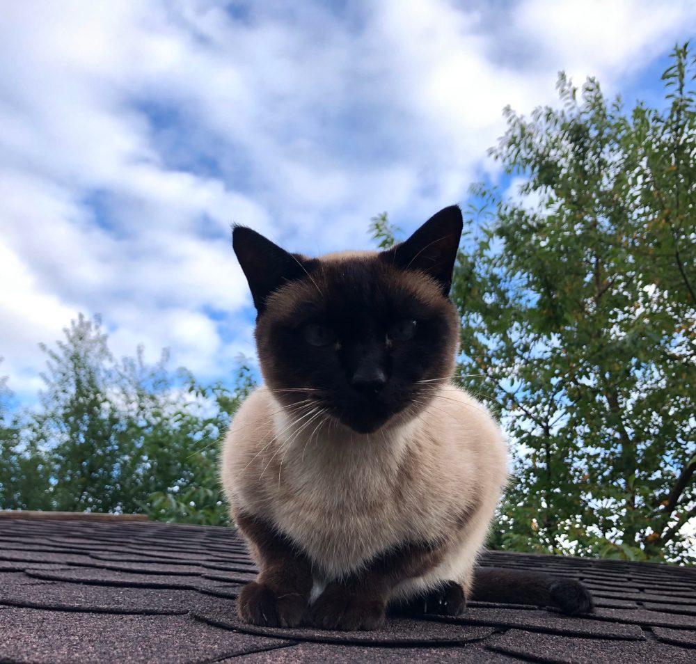 Neugierig schauende Katze auf einem Dach