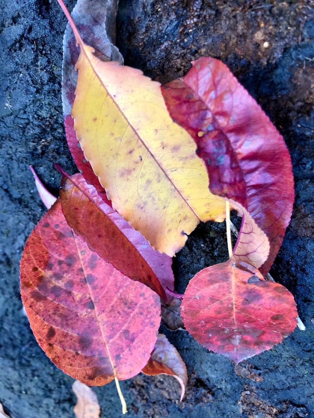 Gelbe und pinkfarbene Blätter auf einem Baumstamm