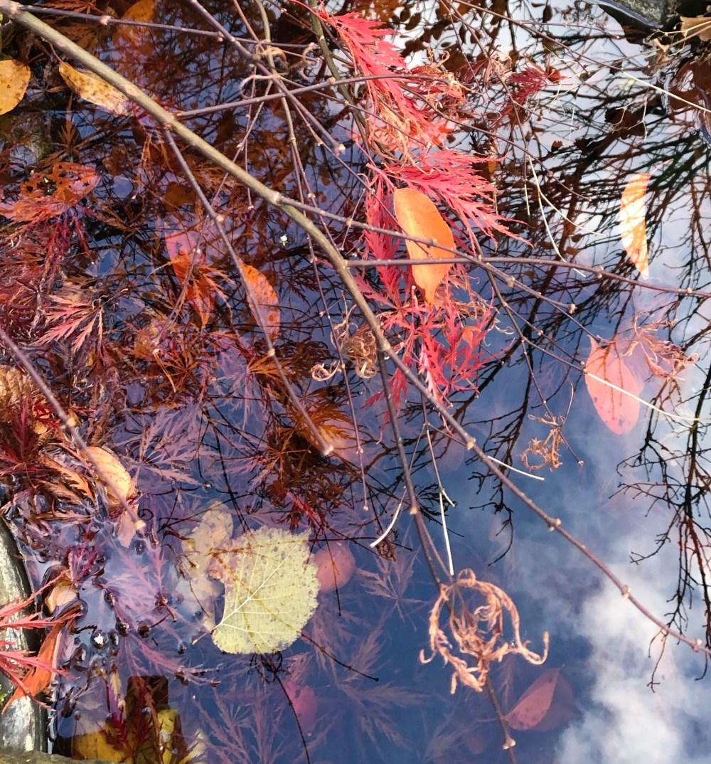 Rötliche Blätter in einem Teich