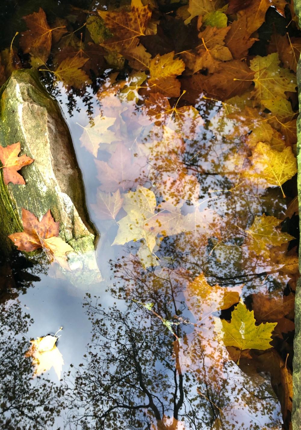 Gelborangene Blätter in einem Wasserbecken
