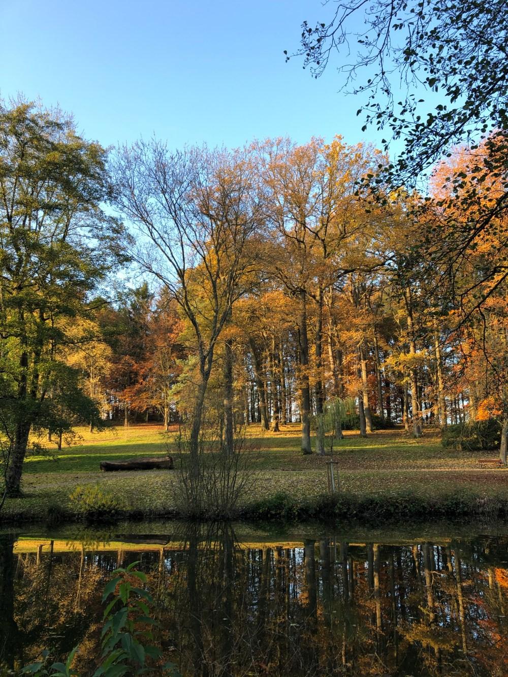 Baumreihe mit gelborange gefärbten Blättern vor einem Weiher