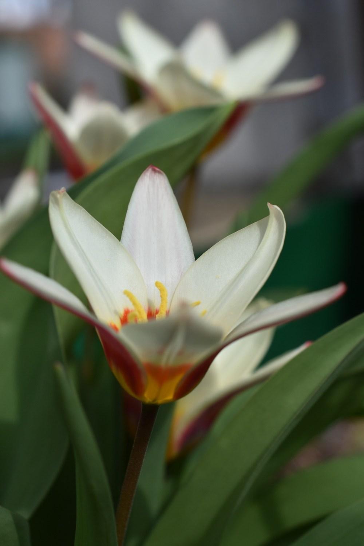 Liliengewächs zwischen grünen Blättern