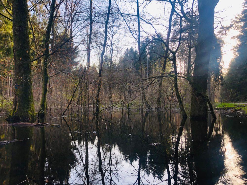 Bäume spiegeln sich auf einem Gewässer im Wald wider