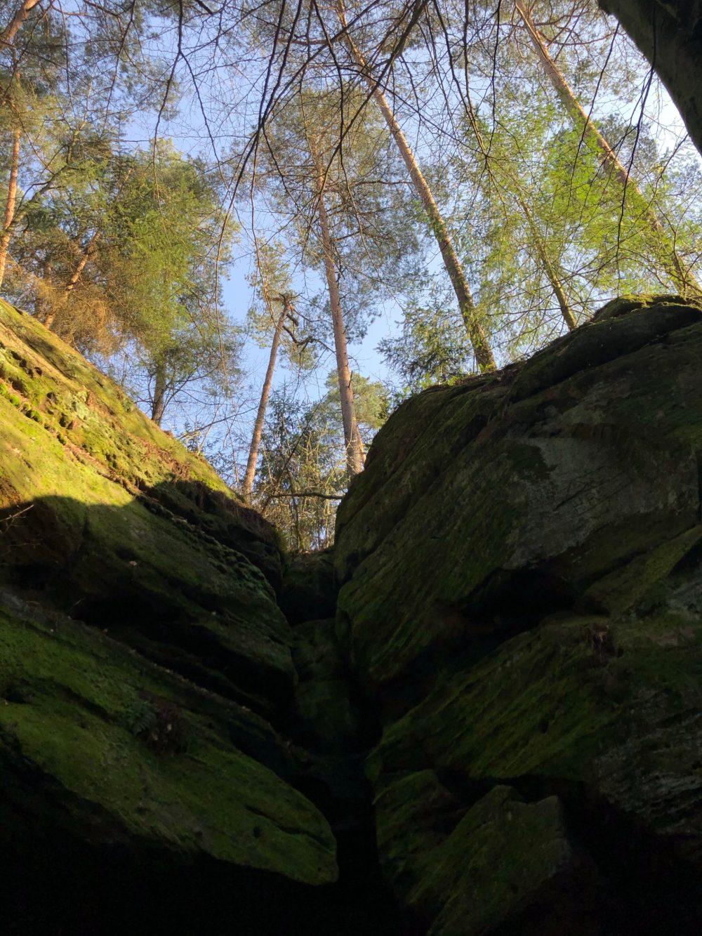 Bäume auf grünlichem Felsen