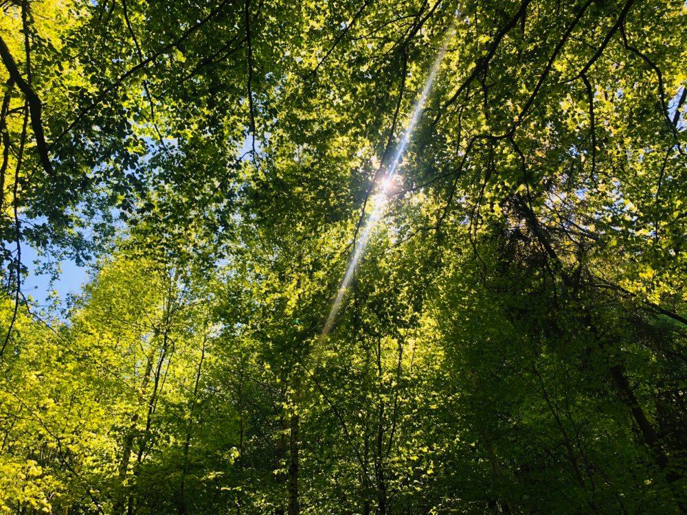 Sonnenstrahlen zwischen den Zweigen der Bäume