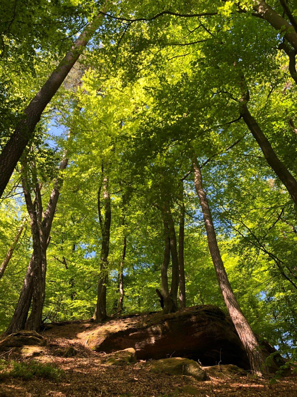 Felsen unter strahlend grünen Baumkronen