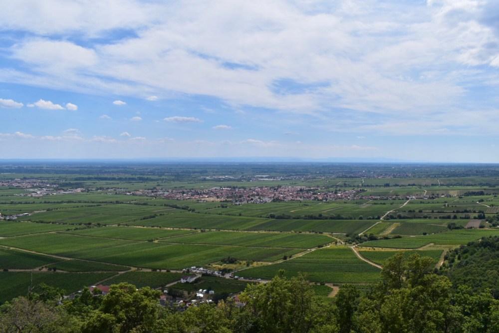 Ausblick vom Hambacher Schloss auf die Weinrebenfelder