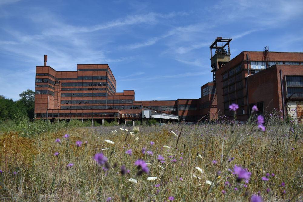Blumen vor La Mine Wendel unter blauem Himmel