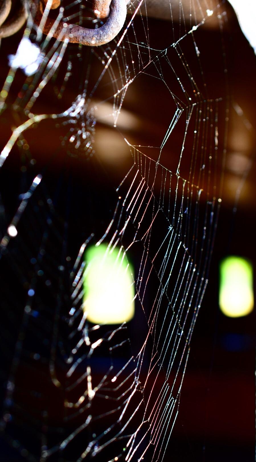 Spinnennetz in einem der Förderwagen