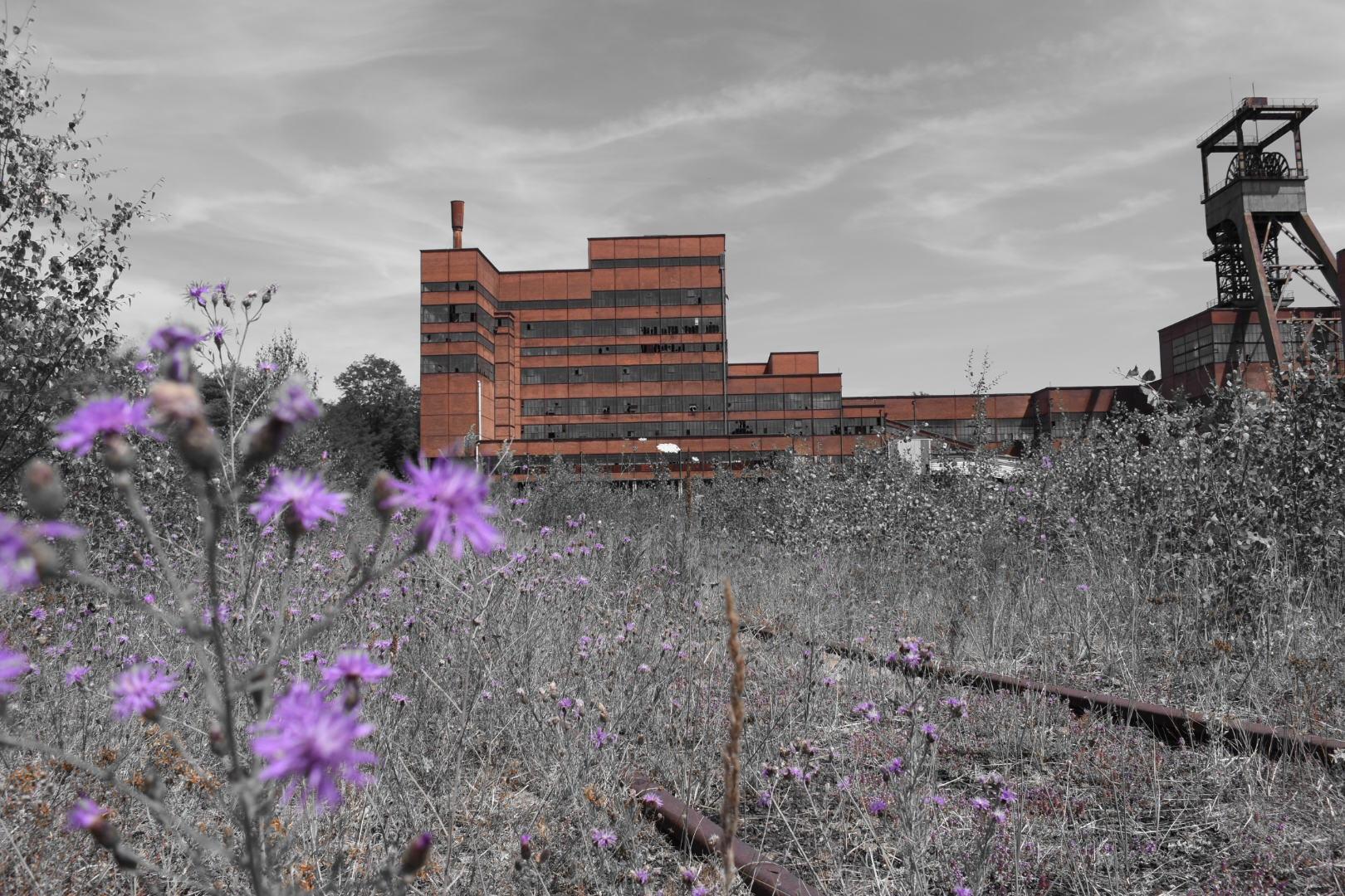 Bewachsenes Gelände vor dem Bergwerk, mit selektiver Farbe fotografiert
