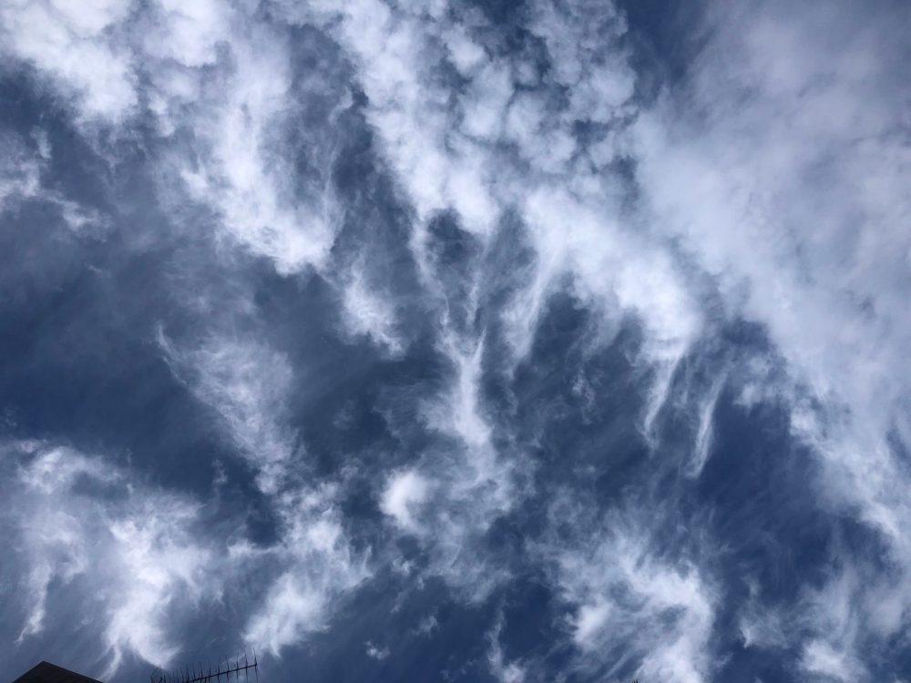 Wolkenkatze