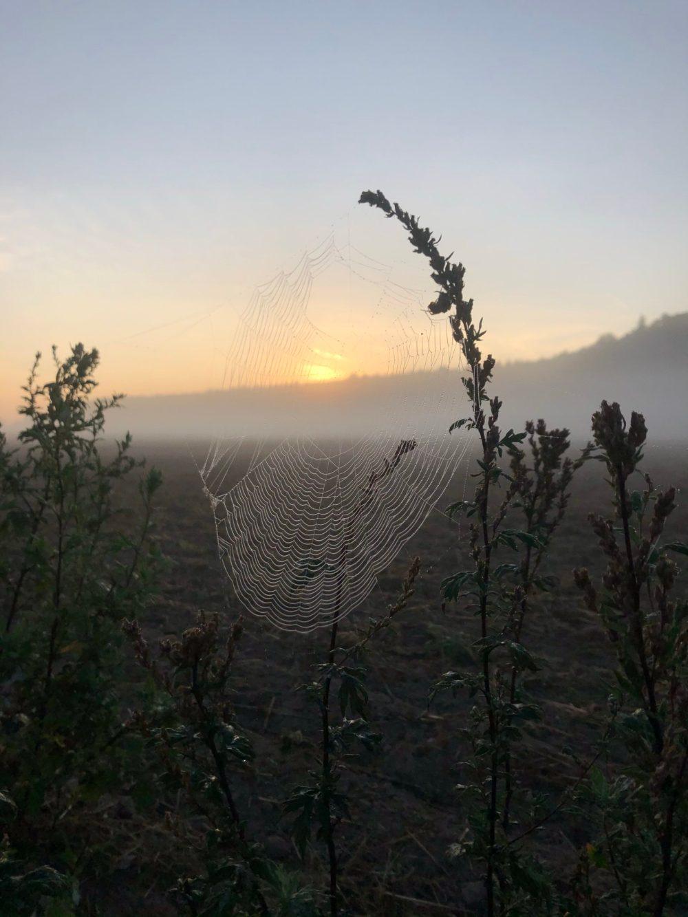 Tauperlen im Spinnennetz mit Nebelschleier im Hintergrund