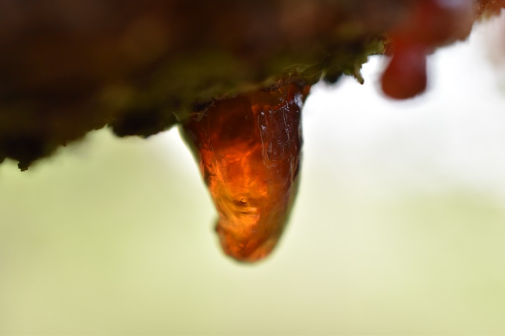 Ein Tropfen Harz mit dem Makroobjektiv aufgenommen