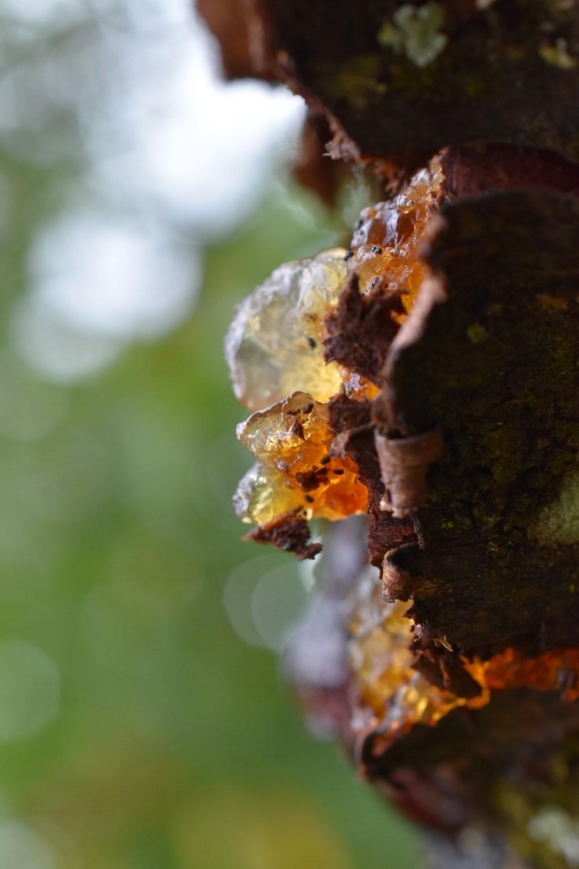 Leuchtendes Baumblut