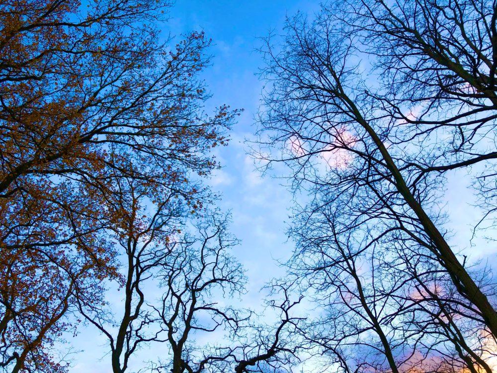 Äste der Bäume im bläulichen Ton