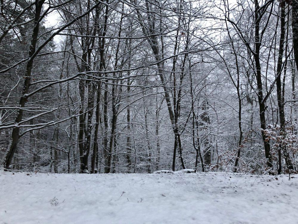 Schneebedeckter Boden mit Bäumen im Hintergrund