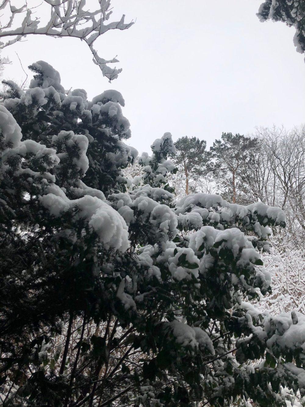 Mit Schnee bedeckter Baum im Kirkeler Wald