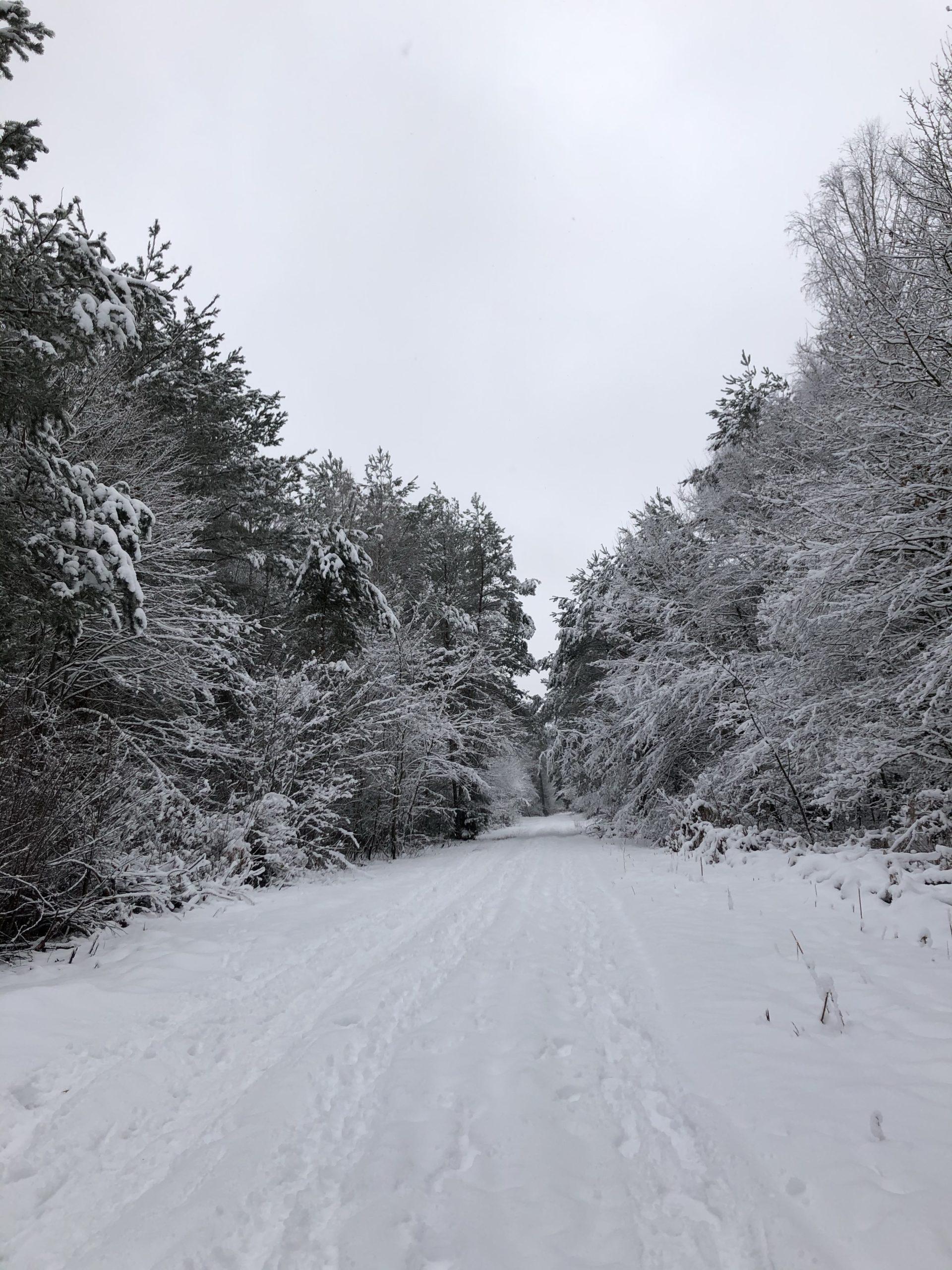 Schneebedeckte Waldlandschaft