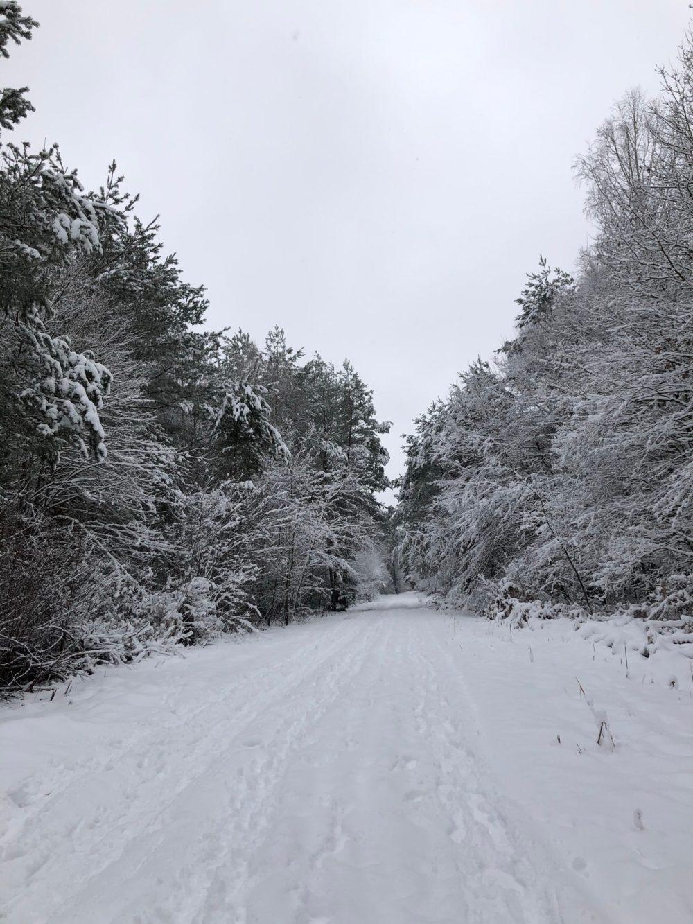 Schneebedeckte Waldlandschaft im Kirkeler Wald im Winter