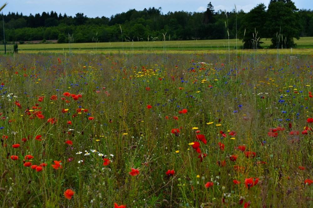 Bunte Blumen verschiedener Arten im Feld