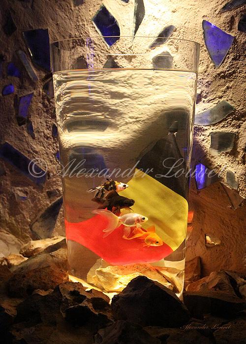 """Photo """"Belgium 4 Regions"""" 70X50"""