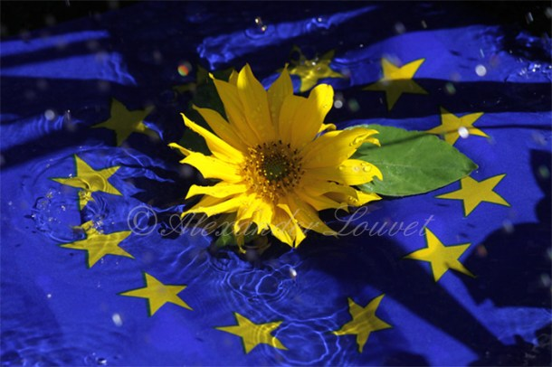 "Photo ""EU Flower"" 70X50"