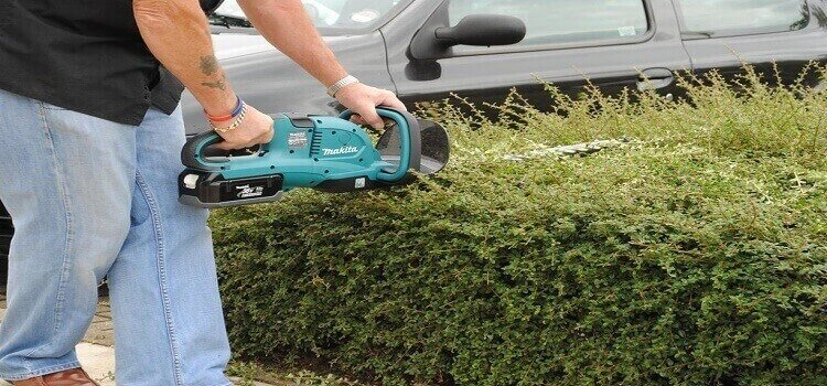 cutiing bush with a makita chainsaw