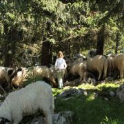 Nomadi 21. vijeka: Život na vrhu planine Vlašić