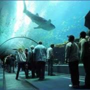 Najveći Akvarijum Na Svijetu Džordžija