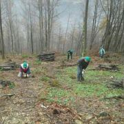 Radnici MS&WOOD-a na Vranici ove godine zasadili 21 hiljadu sadnica