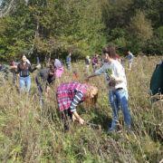 Ekologija: Sadnica više – bolje se diše