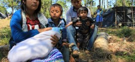 Velasco no da respuesta, pese a que existe compromiso formal, de atender caso de indígenas tojolabales desplazados