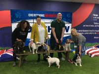 Contestants at the EverythingBranded dog show