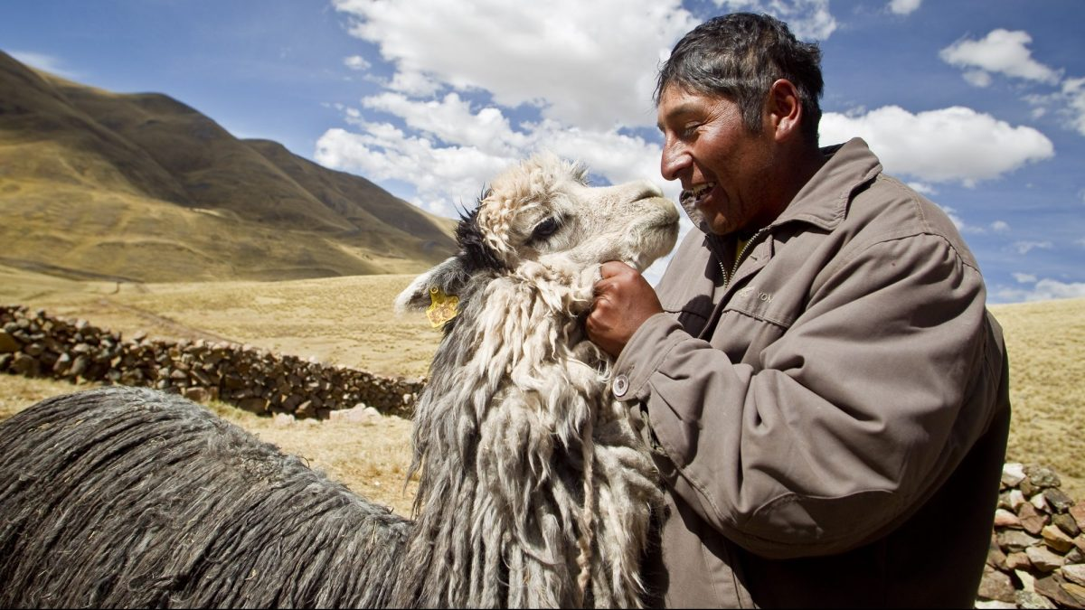 Comunidades Alpaqueras Puno
