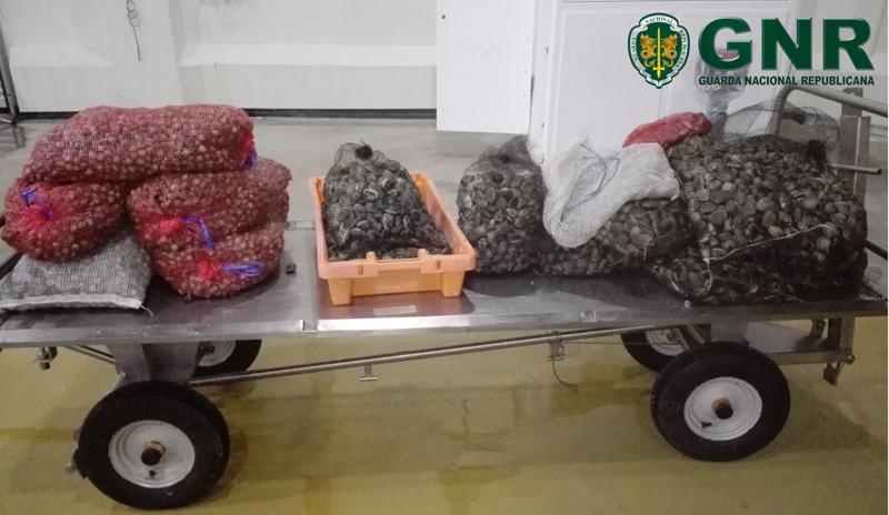 GNR apreendeu 277 quilos de moluscos por falta de rastreabilidade