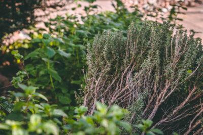 Popularne zioła na trawienie występujące w Polsce (+przepis)