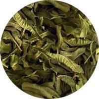 werbena-cytrynowa-liśćrebalife