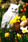 white owl with daffodils illustrating an article about creative writing tips
