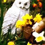 white owl with daffodils illustrating an article for writers about how to be creative.