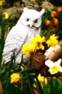white owl with daffodils illustrating an article about choosing a theme